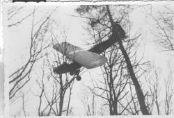 "A Piper L-4 ""Cub"" in a tree"